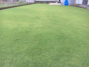 2016年8月27日の雨降り後の朝の芝生。少し低めの目線。