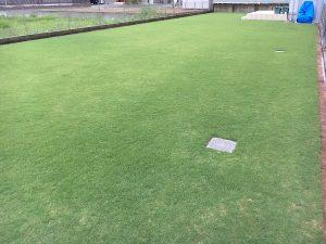 2016年8月27日の雨降り後の朝の芝生。