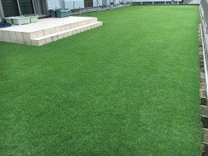 2016年8月27日の昼の裏庭の芝生。