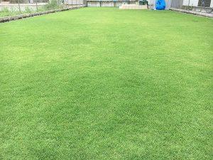 2016年8月27日の昼の裏庭の芝生。少し低めの目線。
