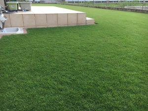 2016年8月28日の朝の裏庭の芝生。少し低めの目線。