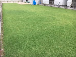 2016年8月29日の朝の裏庭の芝生。