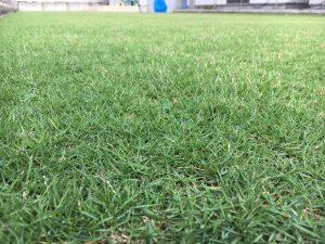 2016年8月29日の朝の裏庭の芝生。かなり低めの目線。