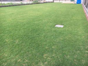 2016年8月29日の朝の裏庭の芝生。少し低めの目線。