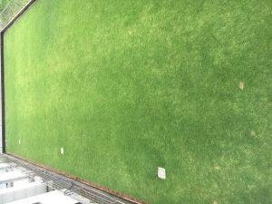 2016年8月30日の裏庭の芝生。2階のバルコニーから。