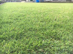 2016年8月30日の午後の台風通過後の裏庭の芝生。かなり低めの目線。