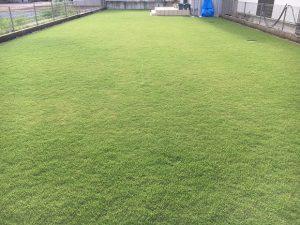 2016年8月30日の午後の台風通過後の裏庭の芝生。