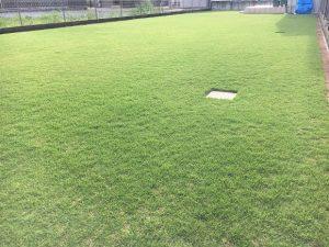 2016年8月30日の午後の台風通過後の裏庭の芝生。少し低めの目線。