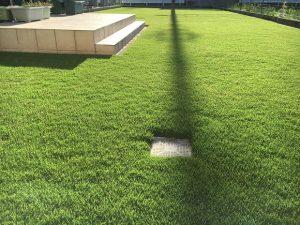 2016年8月31日の朝の裏庭の芝生。少し低めの目線。