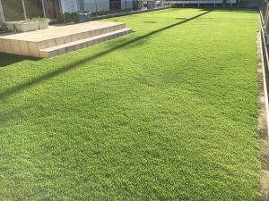 2016年8月31日の朝の裏庭の芝生。