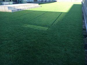 2016年8月31日の午後の裏庭の芝生。少し低めの目線。