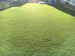 2016年8月31日の午後の裏庭の芝生。