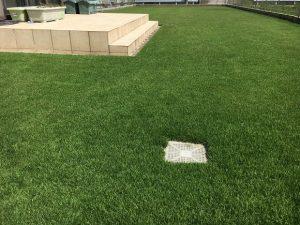 2016年9月1日の昼過ぎの裏庭の芝生。少し低めの目線。