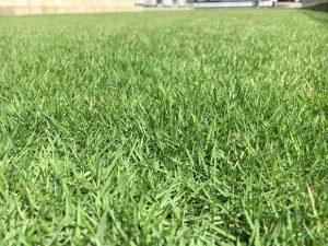 2016年9月1日の昼過ぎの裏庭の芝生。かなり低めの目線。