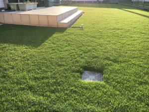 2016年9月2日の朝の裏庭の芝生。少し低めの目線。