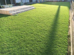 2016年9月2日の朝の裏庭の芝生。