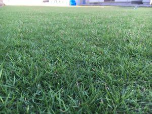 2016年9月2日の朝の裏庭の芝生。かなり低めの目線。