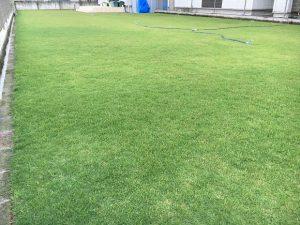 2016年9月6日の朝の裏庭の芝生。少し低めの目線。