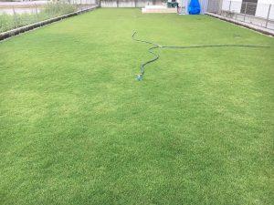 2016年9月6日の朝の裏庭の芝生。
