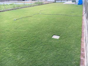2016年9月9日の夕方の裏庭の芝生。