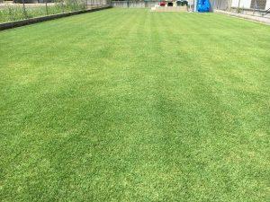 芝刈り(or 穂刈り?)終了後の芝生。少し低めの目線。