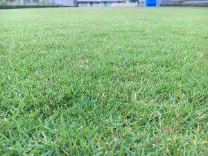 2016年9月14日の朝の裏庭の芝生。かなり低めの目線。