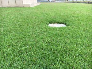 2016年9月17日の昼前の裏庭の芝生。まあまあ低めの目線。