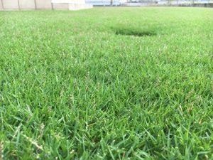 2016年9月17日の昼前の裏庭の芝生。かなり低めの目線。
