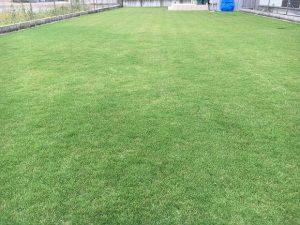 2016年9月17日の昼前の裏庭の芝生。少し低めの目線。