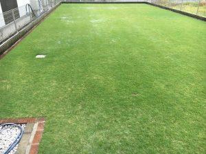 2016年9月18日の朝の裏庭の芝生。雨。