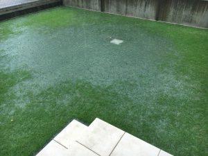 2016年9月18日の朝の裏庭の芝生。雨。雨水桝の周囲に大きな水溜まり。