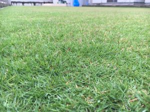 2016年9月22日の朝のダコニール1000散布後の裏庭の芝生。南東から。