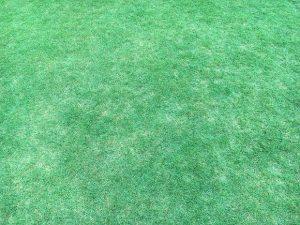 芝生の勢いが衰えて茶色い箇所が増えてきた。