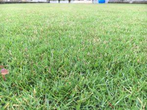 2016年9月22日の午後の万緑-NHT散布後の裏庭の芝生。
