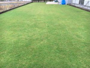2016年10月1日の朝の小雨のなかの裏庭の芝生。