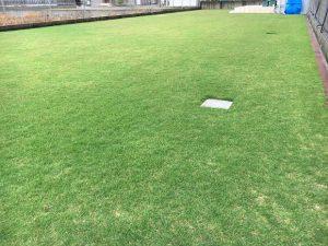 2016年10月1日の朝の小雨のなかの裏庭の芝生。少し低めの目線。