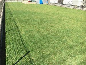 2016年10月2日の芝刈りの後の裏庭の芝生。