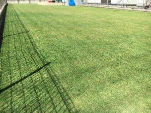 2016年10月2日の芝刈りの後の裏庭の芝生。少し低めの目線。
