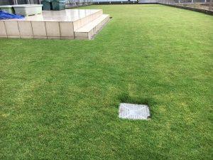 2016年10月8日の雨の中の裏庭の芝生。
