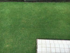 2016年10月9日の裏庭の芝生。2階のバルコニーから撮影。