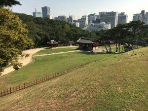 韓国の芝生。