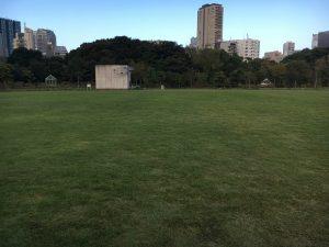 東京の芝公園の芝生広場の芝生。