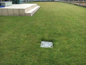 2016年10月18日の朝の裏庭の芝生。少し低めの目線。