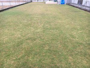 2016年10月27日の朝の裏庭の芝生。