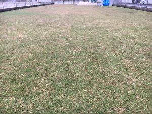 2016年10月27日の朝の裏庭の芝生。少し低めの目線。