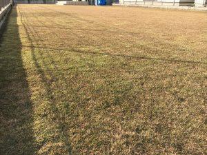 2016年11月26日の裏庭の芝生。グリーンウェイの散布前。少し低めの目線。