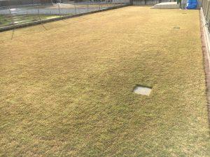 2016年11月26日の裏庭の芝生。グリーンウェイの散布前。