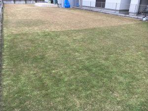 2016年11月26日の裏庭の芝生。グリーンウェイの散布途中。