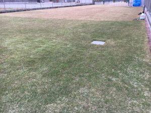 2016年11月26日の裏庭の芝生。グリーンウェイの散布途中。少し低めの目線。