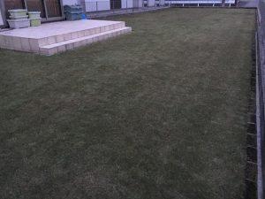 2016年11月26日の裏庭の芝生。グリーンウェイの散布後。